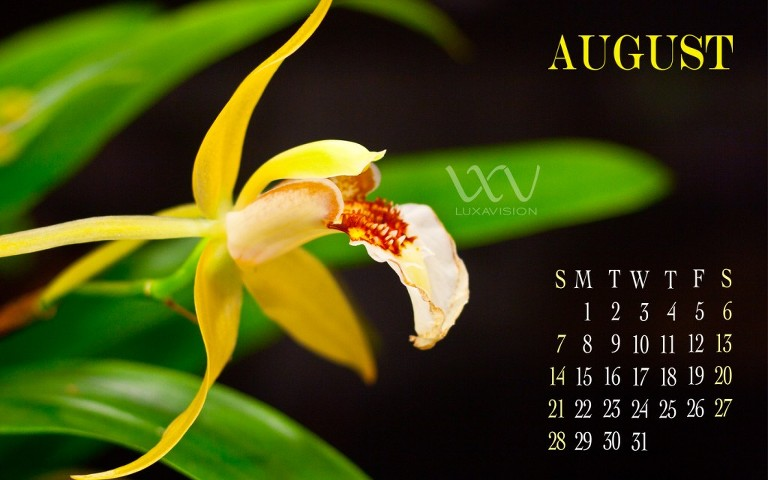 Desktop Calendar for August 2011 | Yellow Orchid -1440x900