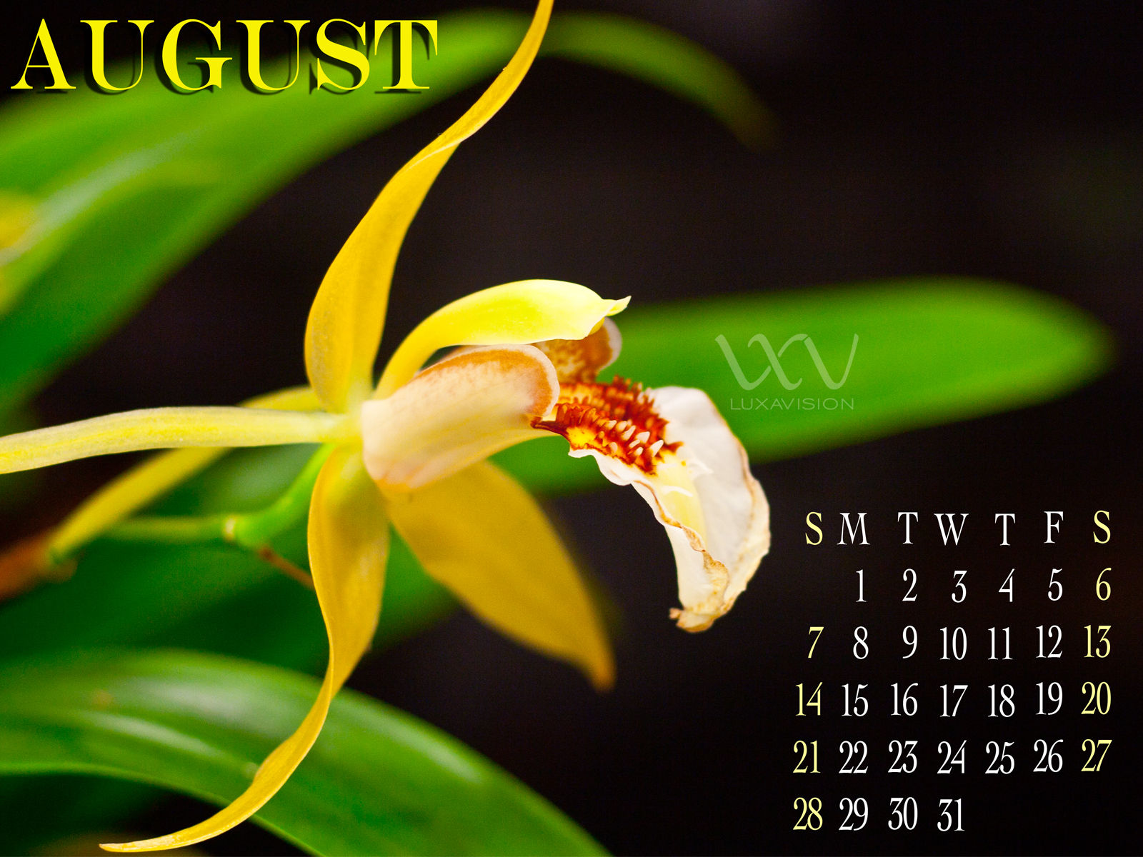 Desktop Calendar for August 2011 - Yellow Orchids - 1600x1200