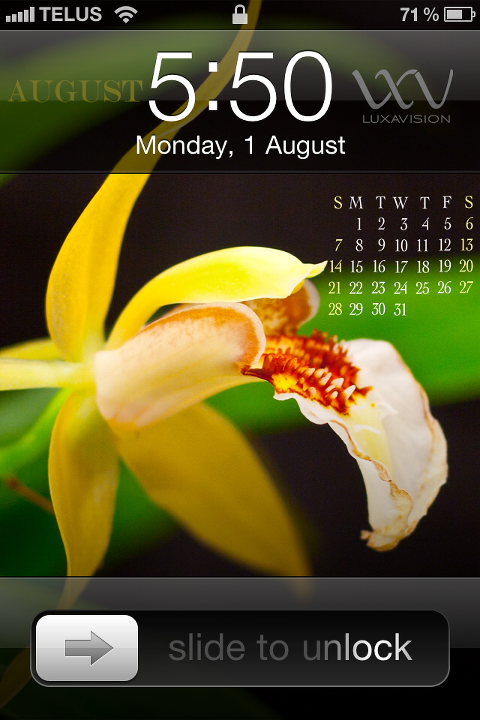Desktop Calendar for August 2011 - Yellow Orchids - iPhone Print Screen