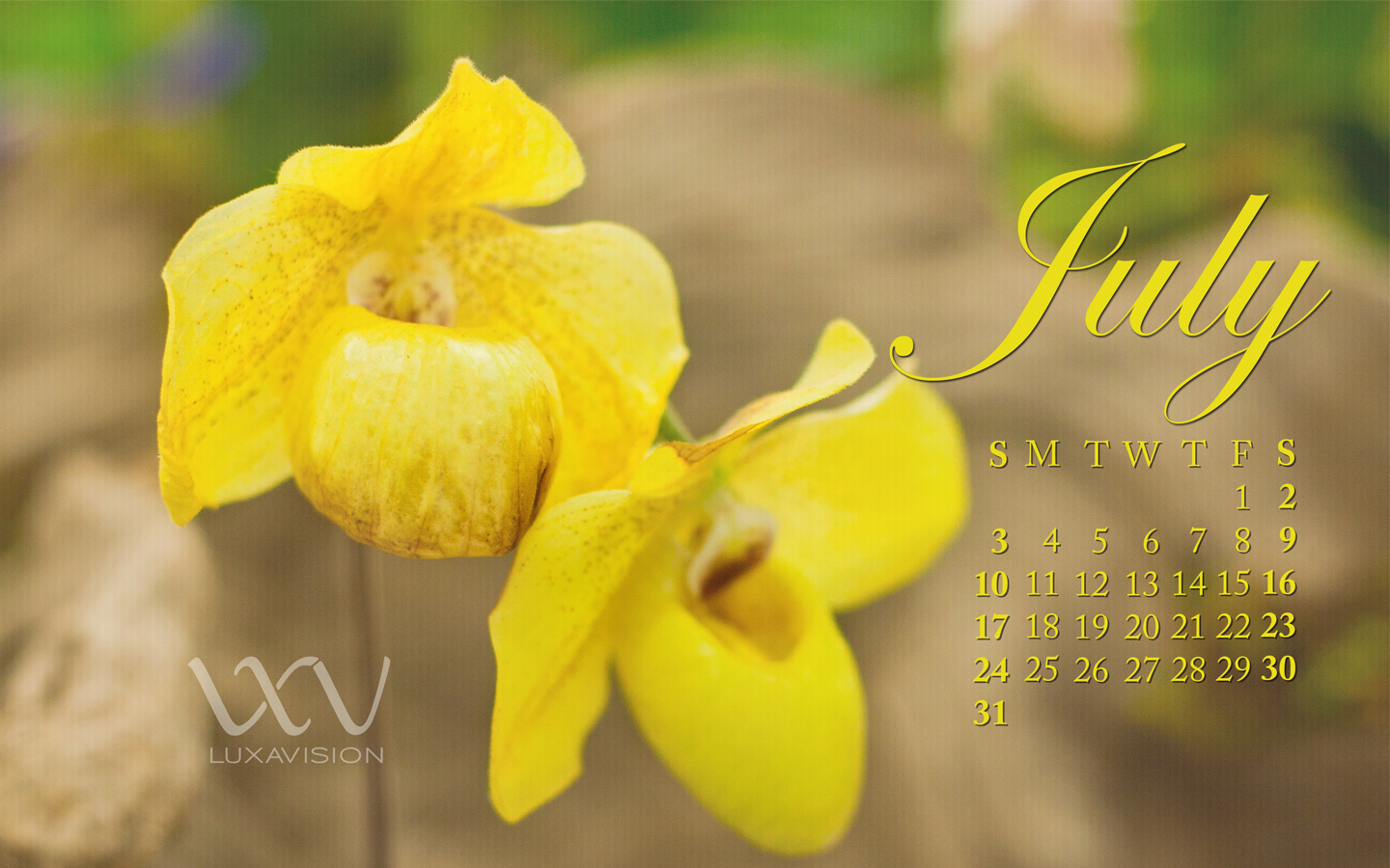 Desktop Calendar for July 2011 - Yellow Orchids - 1440x900