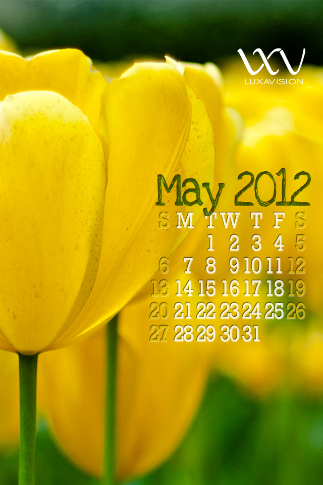 Desktop Calendar for May 2012 - Yellow Tulips Macro iPhone