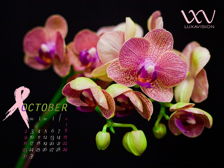 Desktop Calendar for October 2011 - Breast Cancer Awareness Month - Pink and Green Orchids - 1600x1200