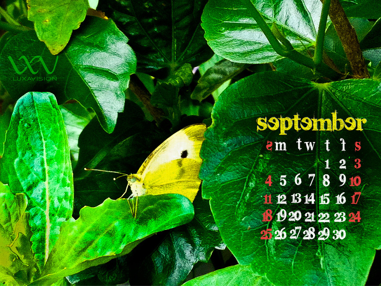 Desktop Calendar for September 2011 - Yellow Butterfly - 1600x1200