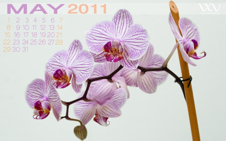 Desktop Calendar for May 2011 | White + Pink Orchids