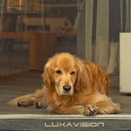 Cute Golden Retriever Sitting by Door